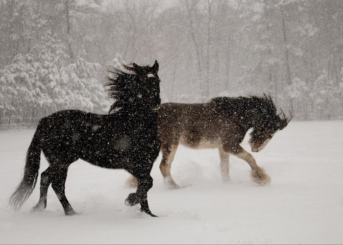 Horses Greeting Card featuring the photograph Frolic In The Snow by Kristia Adams