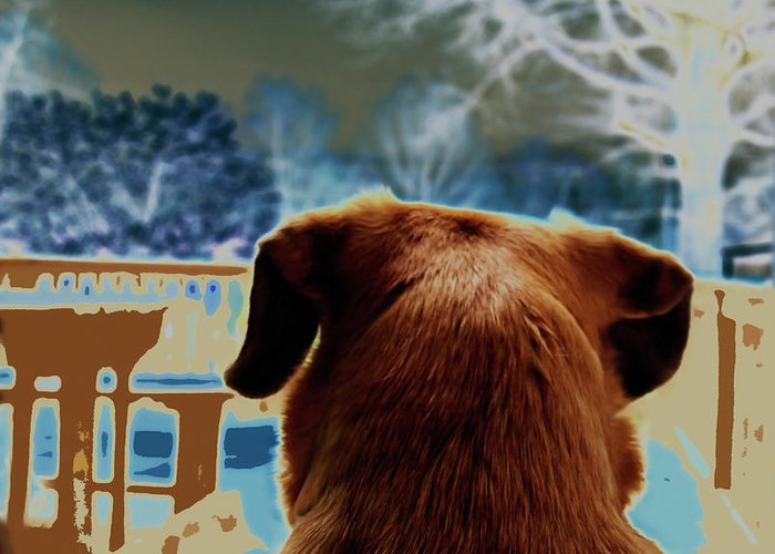 Dogs Greeting Card featuring the photograph From Her Perspective  by Steven Digman