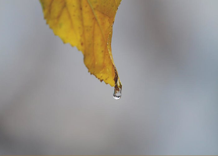 Dripping Water Greeting Cards