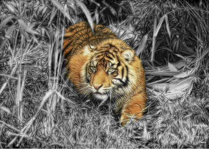 Tiger Greeting Card featuring the photograph From The Darkness by Steve McKinzie