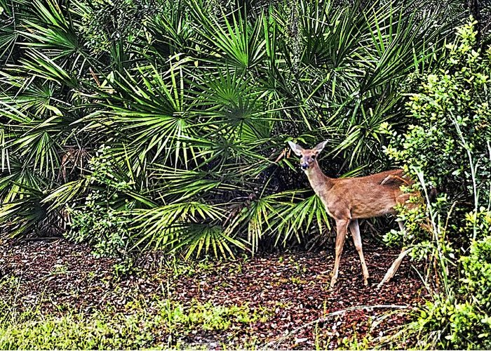 Wildlife Greeting Card featuring the photograph From The Palmetto Bushes by Jan Amiss Photography