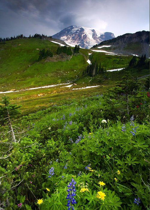 Rainier Greeting Card featuring the photograph From The Top by Mike Dawson