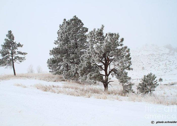 Art Greeting Card featuring the photograph Frost . Fog And Twenty Below ... Montana Art Photo by GiselaSchneider MontanaArtist