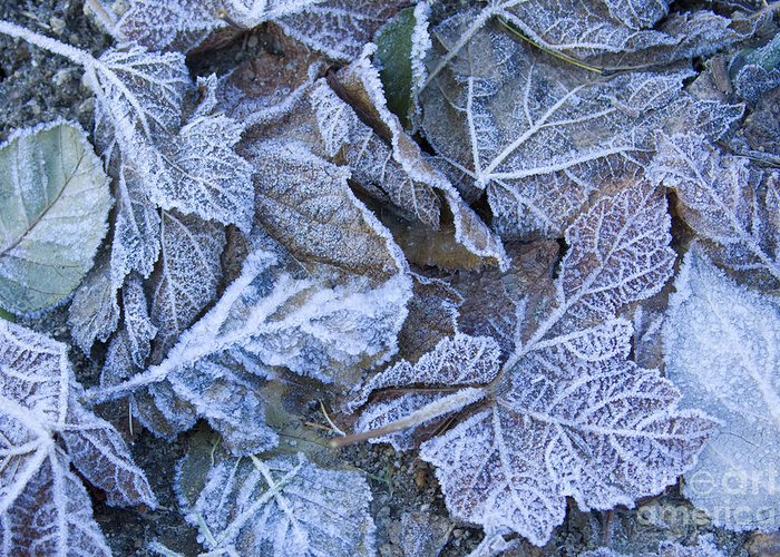 Frost Greeting Card featuring the photograph Frost by Idaho Scenic Images Linda Lantzy