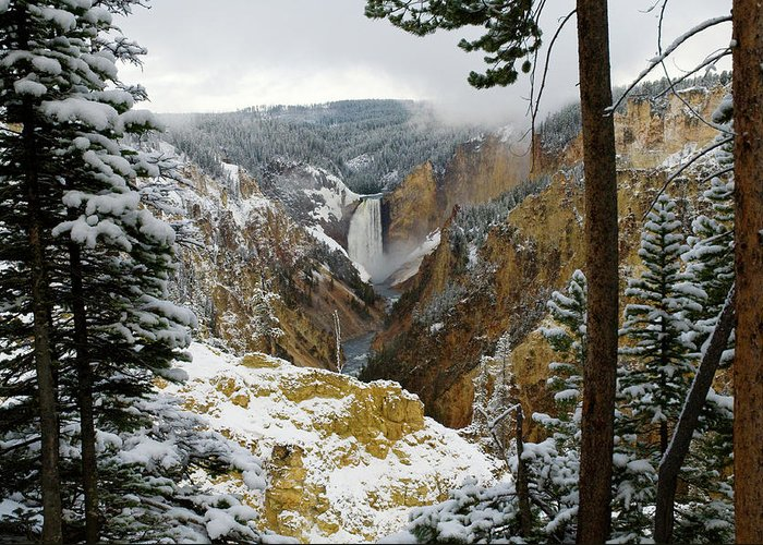 Yellowstone Greeting Card featuring the photograph Frosted Canyon by Steve Stuller