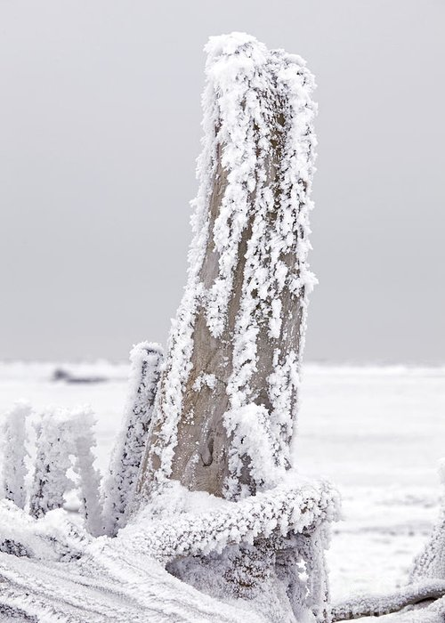 Tree Greeting Card featuring the photograph Frosted Tree Root by Tim Grams