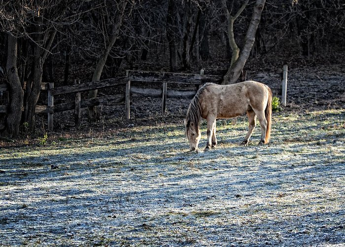 Horse Greeting Card featuring the photograph Frosty Autumn Morning by Al Mueller
