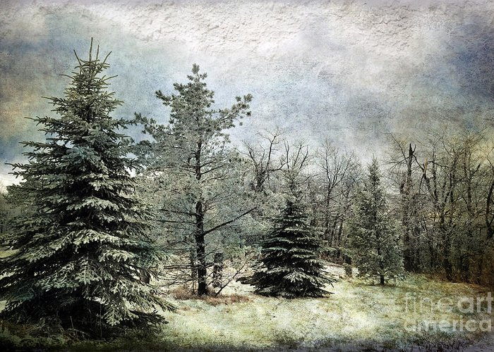 Snow Greeting Card featuring the photograph Frosty by Lois Bryan