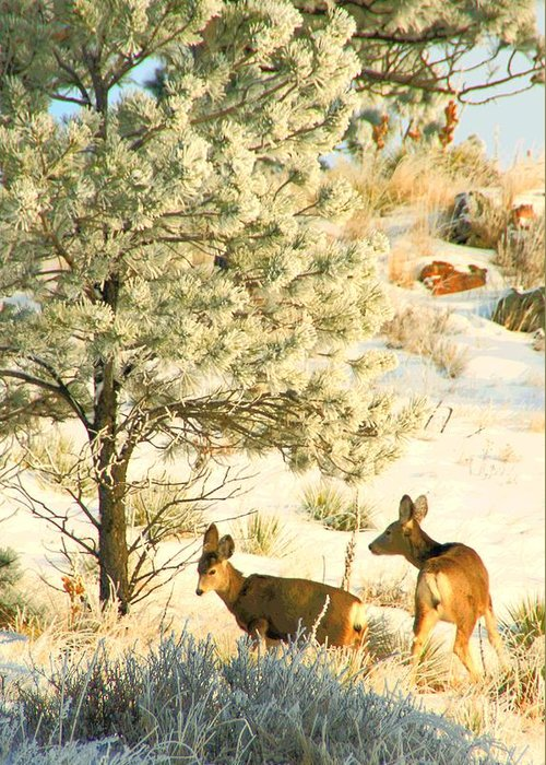 Art Greeting Card featuring the photograph Frosty Lunch ... Montana Art Photo by GiselaSchneider MontanaArtist