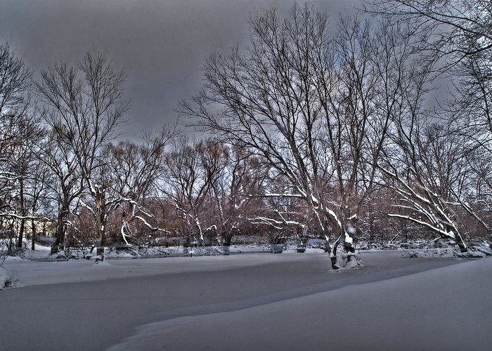 Winter Greeting Card featuring the photograph Frozen At The Creek's Edge by Steven Geer