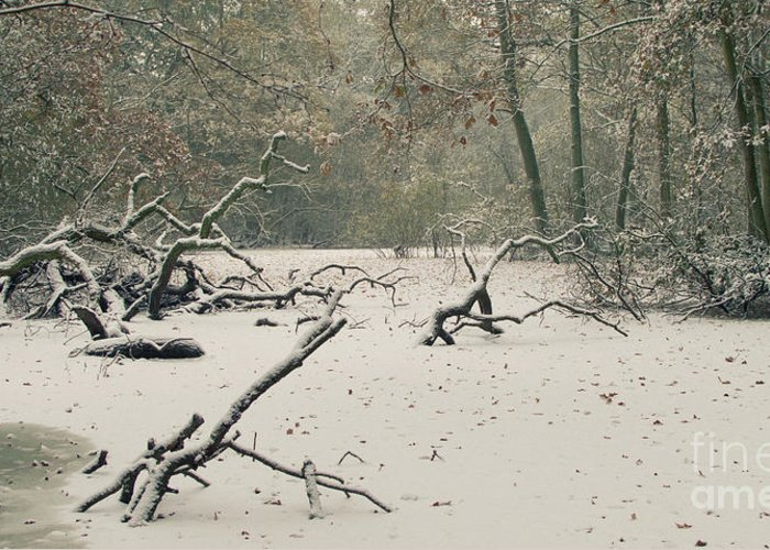 Countryside Greeting Card featuring the photograph Frozen Fallen Wide by Andy Smy