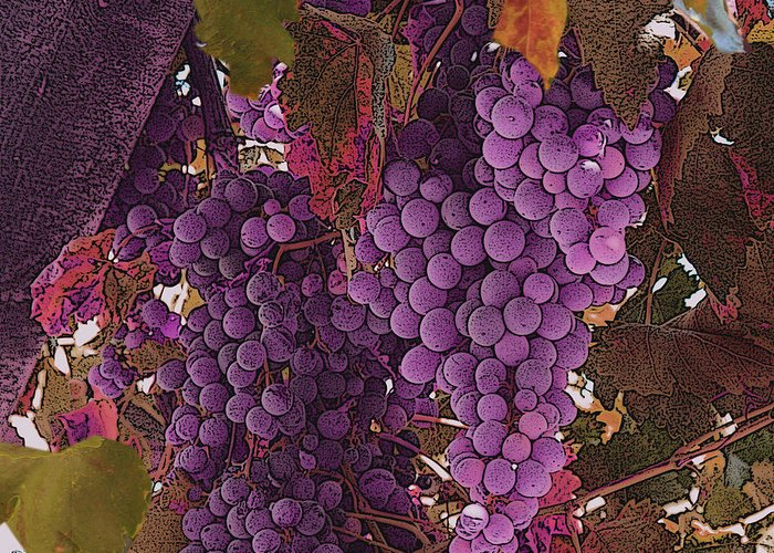 Grapes Greeting Card featuring the photograph Fruit Of The Vine by Nicholas J Mast