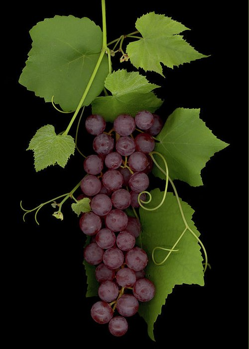 Grapes Greeting Card featuring the mixed media Fruit Of The Vine by Sandi F Hutchins