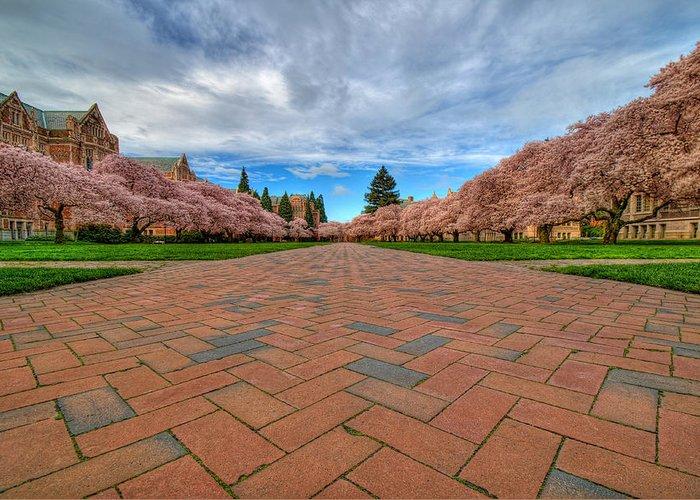 University Of Washington Greeting Card featuring the photograph Full Bloom by Dan Mihai