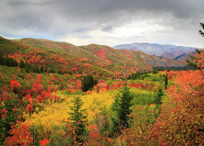 Autumn Greeting Card featuring the photograph Full-Blown Autumn in the Wasatch Mountains by Dan Pearce