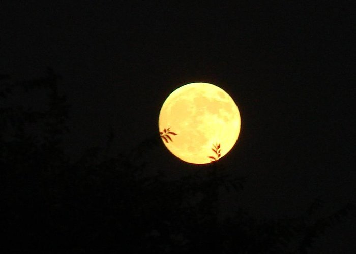 Full Moon Greeting Card featuring the photograph Full Moon August 2008 by Liz Vernand