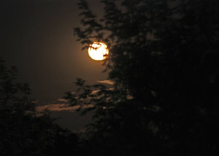 Nature Greeting Card featuring the photograph Full Moon by Lisa Gabrius