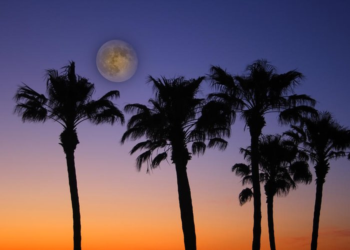 Moon Greeting Card featuring the photograph Full Moon Palm Tree Sunset by James BO Insogna