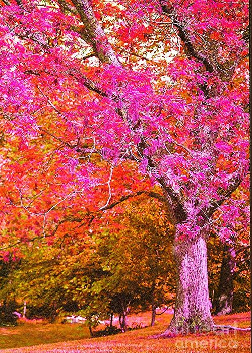 Fuschia Greeting Card featuring the photograph Fuschia Tree by Nadine Rippelmeyer