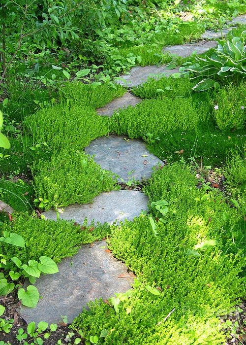 Path Greeting Card featuring the photograph Garden Path by Idaho Scenic Images Linda Lantzy