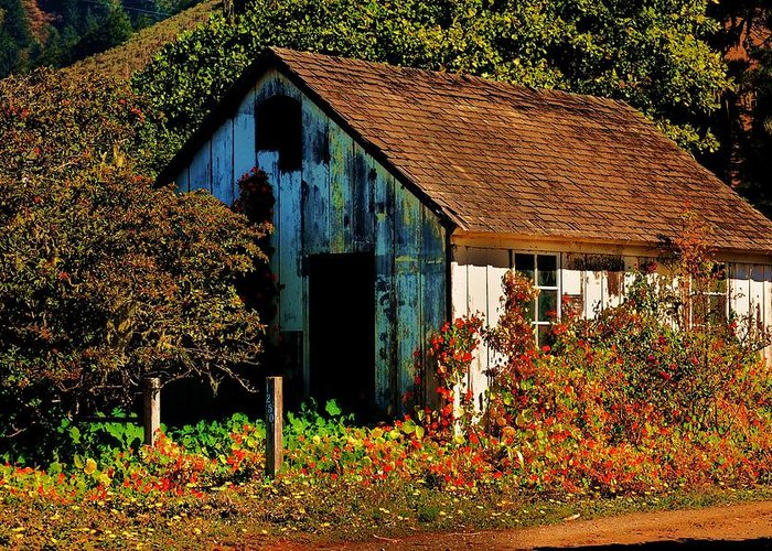 Garden Shed Greeting Card featuring the photograph Garden Shed by Helen Carson