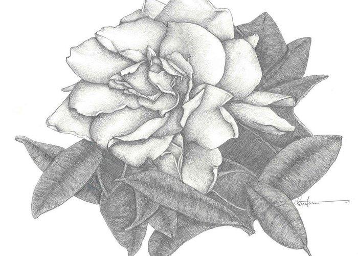 гардения цветок рисунок