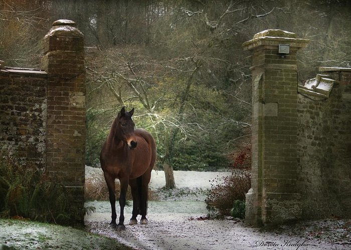 Horse Greeting Card featuring the photograph Gate To Another World by Dorota Kudyba