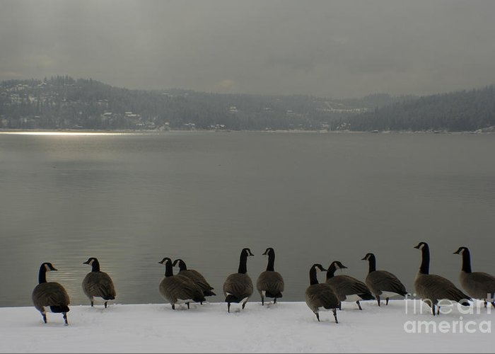 Geese Greeting Card featuring the photograph Geese On The Edge by Idaho Scenic Images Linda Lantzy