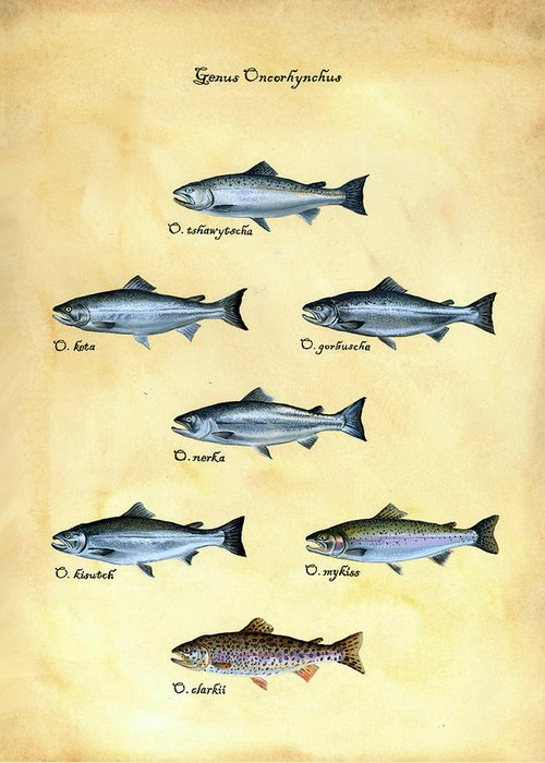 Salmon Greeting Card featuring the painting Genus Oncorhynchus by Logan Parsons