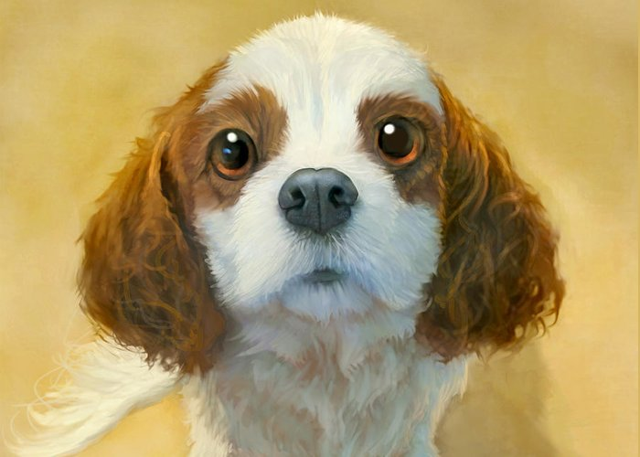 King Charles Spaniel Greeting Cards