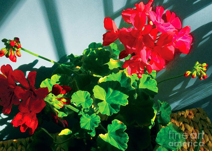 Red Flowers Greeting Card featuring the photograph Geranium by David Klaboe