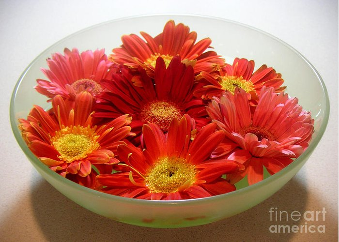 Nature Greeting Card featuring the photograph Gerbera Daisies - A Bowl Full by Lucyna A M Green