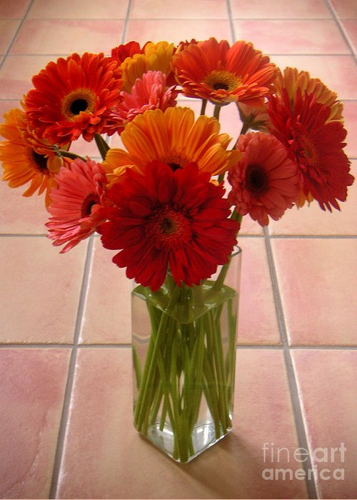 Nature Greeting Card featuring the photograph Gerbera Daisies - On Tile by Lucyna A M Green