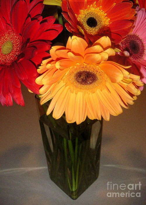 Nature Greeting Card featuring the photograph Gerbera Daisies - Vased by Lucyna A M Green