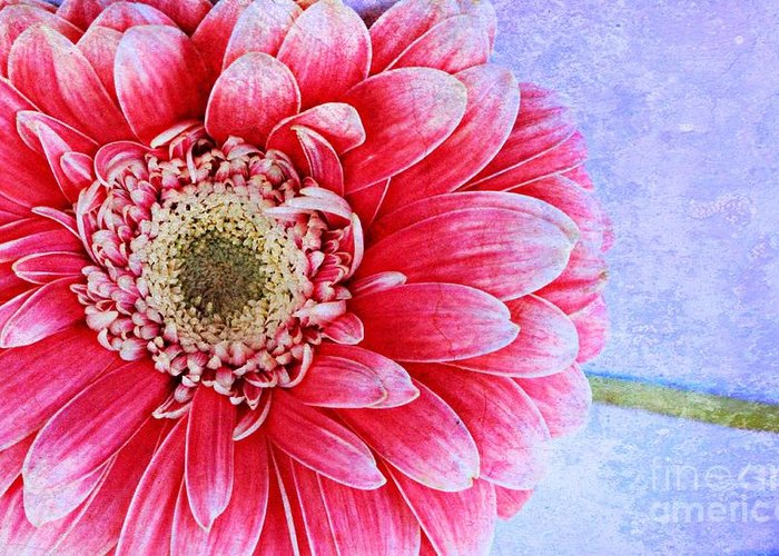 Gerbera Greeting Card featuring the photograph Gerbera Texture by Clare Bevan