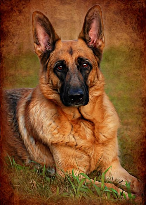 German Shepherd Dog Greeting Card featuring the photograph German Shepherd Dog Portrait by Angie Tirado