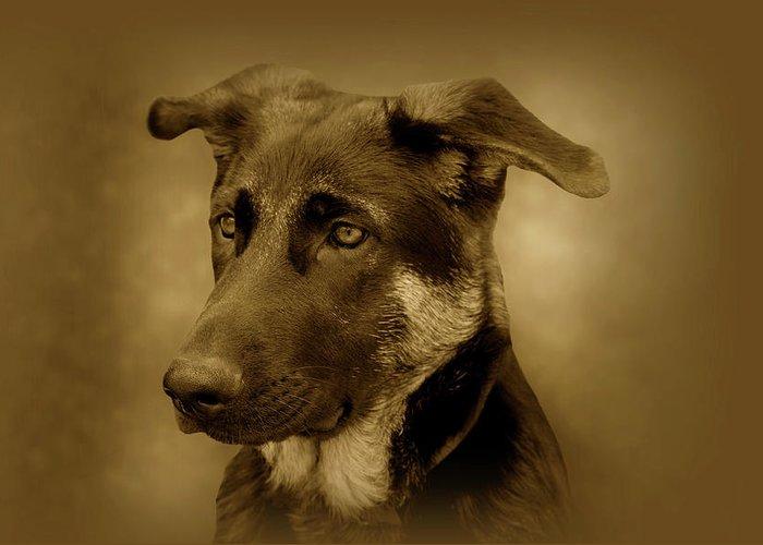 German Shepherd Dog Greeting Card featuring the photograph German Shepherd Pup by Sandy Keeton