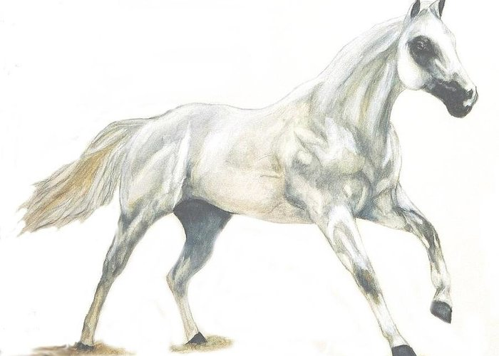 White Horse Greeting Card featuring the painting Ghost Horse by Debra Sandstrom