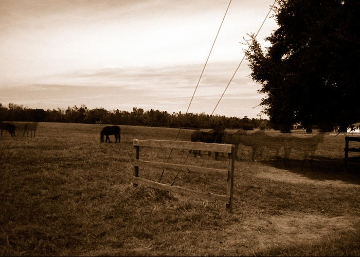 Horses Greeting Card featuring the photograph Ghost Horses Of Huckleberry Lane by Heather S Huston