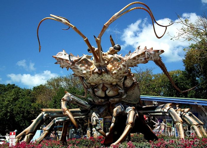 Lobster Greeting Card featuring the photograph Giant Lobster by Tammy Chesney