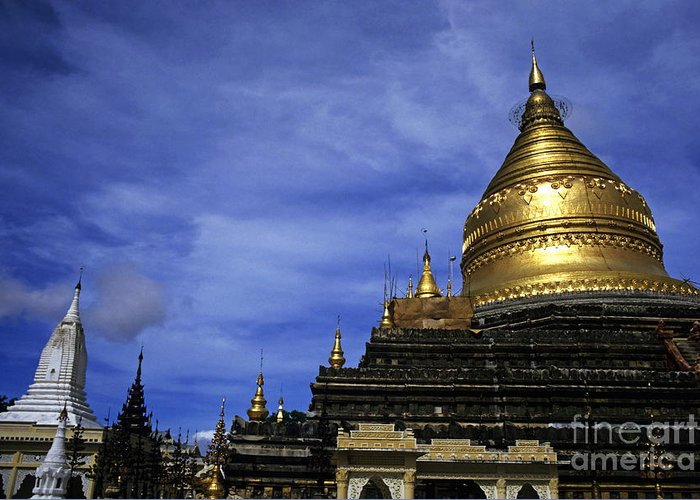 Adult Greeting Card featuring the photograph Gilded Stupa Of The Shwezigon Pagoda In Bagan by Sami Sarkis