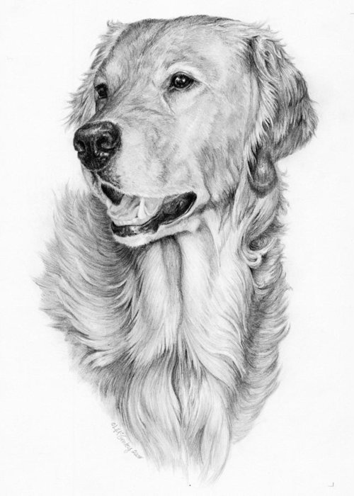 Dog Greeting Card featuring the drawing Ginger by Laurie McGinley