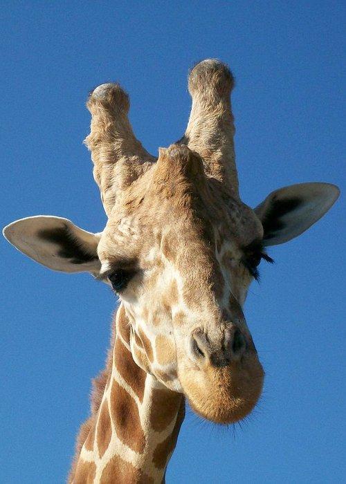 Giraffe Greeting Card featuring the photograph Giraffe 2 by Sara Raber