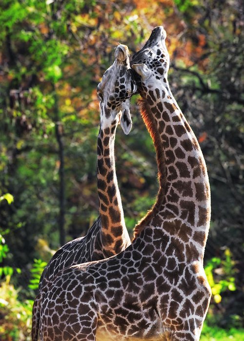 Giraffe Greeting Card featuring the photograph Giraffe by Emmanuel Panagiotakis