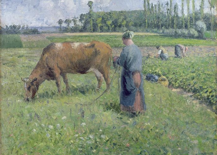 Girl Greeting Card featuring the painting Girl Tending A Cow In Pasture by Camille Pissarro