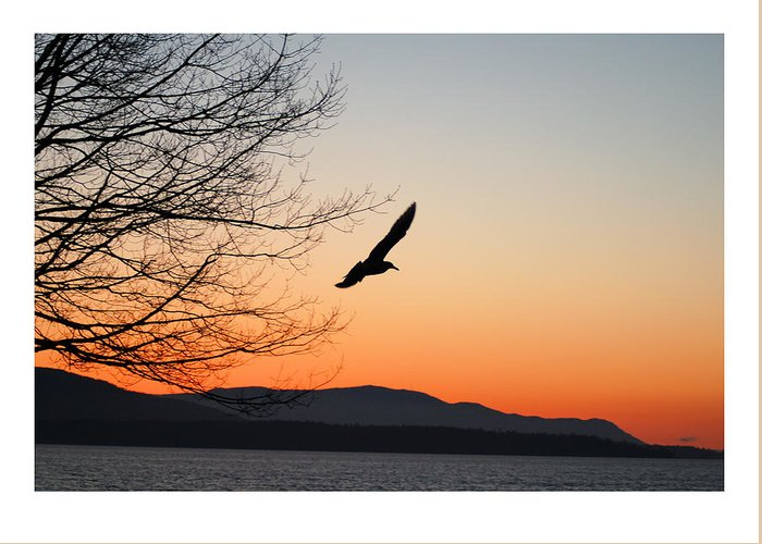 Seagull Greeting Card featuring the photograph Glide by J D Banks