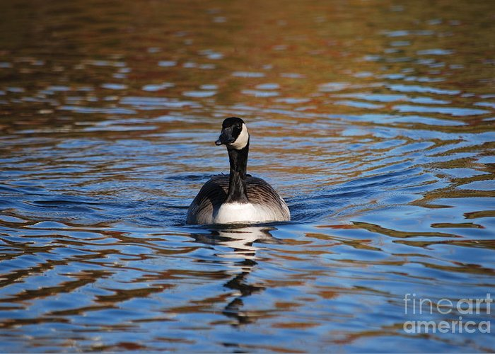 Goose Greeting Card featuring the photograph Glide by Joy Bradley