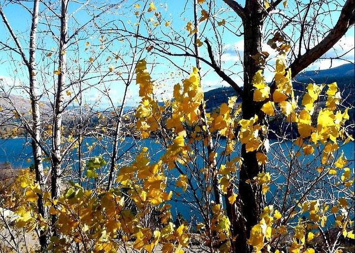 Kalamalka Lake Greeting Card featuring the photograph Glimpse Of Kalamalka Lake by Will Borden