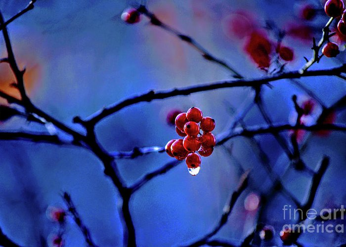 Blue Hills Reservation Greeting Card featuring the photograph Glistening Hope by Dave Pellegrini
