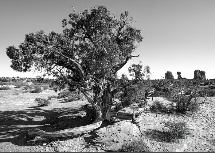 Utah Greeting Card featuring the photograph Gnarled Old Juniper by Craig Hinton